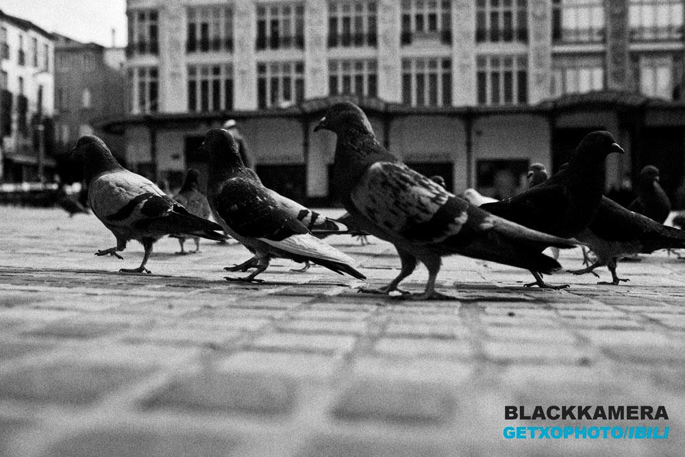 Blackkamera en Getxophoto