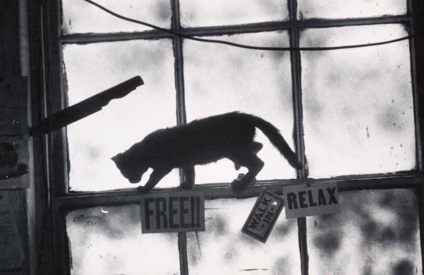 Drama bajo una ventana de la ciudad